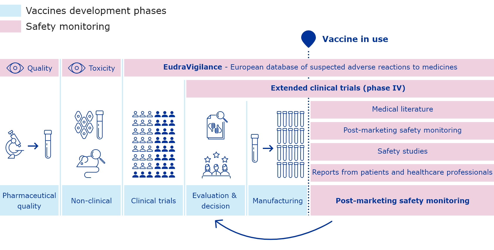Process on how safety of vaccines is studied