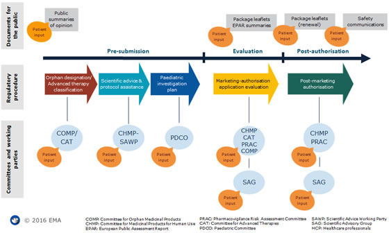 Overview of patient involvement along the medicines lifecycle at EMA