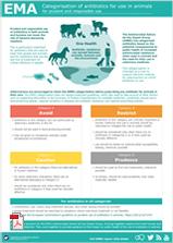 AMEG infographic